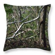 Fallen Sycamore Throw Pillow