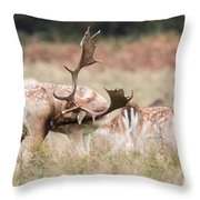Fallow Deer - Amazing Antlers Throw Pillow