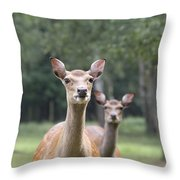 fallow deer Hochwildpark Rhineland Kommern Mechernich Germany Throw Pillow