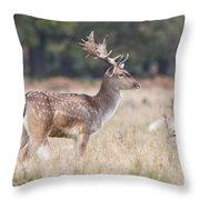 Fallow Deer Buck On Guard  Throw Pillow