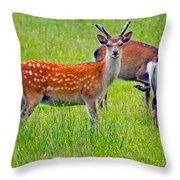 Fallow Deer Throw Pillow