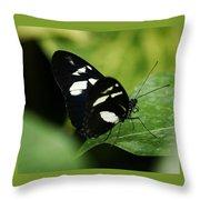 False Zebra Longwing Butterfly Throw Pillow