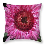Fancy Pink Daisy Throw Pillow