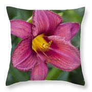 Fancy Red Wine Daylily Throw Pillow