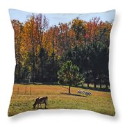 Farm Journal - Grazing Throw Pillow