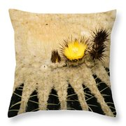 Fascinating Cactus Bloom - Soft And Fragile Among The Thorns Throw Pillow