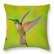 Fawn-breasted Brilliant Hummingbird Throw Pillow