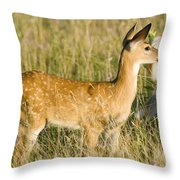 Fawn In Big Meadows Throw Pillow