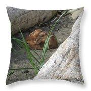 Fawn Resting On Beach Throw Pillow
