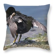 Feather Care Throw Pillow