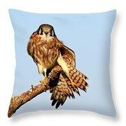 Feather Display Throw Pillow