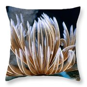 Feather Duster Worms 2 Throw Pillow