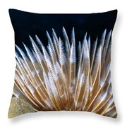 Feather Duster Worms 4 Throw Pillow
