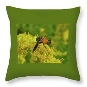 Feather-legged Fly On Goldenrod - Trichopoda Throw Pillow