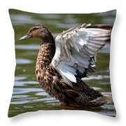 Feather Spread - Female Mallard Throw Pillow