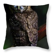 Feathered Beauty Throw Pillow