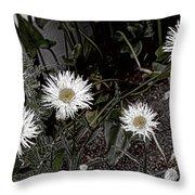 Feathered Daisy  Throw Pillow