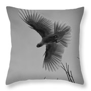 Feathered Flight  Throw Pillow