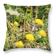 Feathered Visitor Throw Pillow