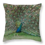 Feathers On Display Throw Pillow
