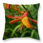 Feathery Orange Crocosmia Throw Pillow