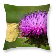 Feeding On Thistle Throw Pillow