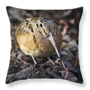 Feeding Woodcock Throw Pillow