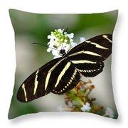 Feeding Zebra Butterfly Throw Pillow