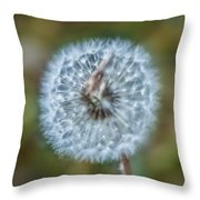 Feeling Fuzzy Throw Pillow