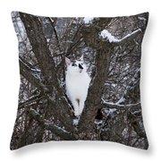 Felis Silvestris Catus In Winter Throw Pillow