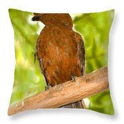 Female Andean Cock-of-the-rock Throw Pillow