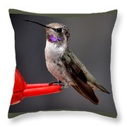 Female Anna's Hummingbird On Perch Posing For Her Supper Throw Pillow