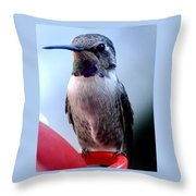 Female Anna With Purple Blue Throat Throw Pillow