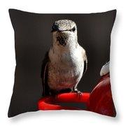Female Anna Hummingbird Throw Pillow