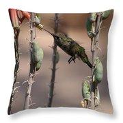 Female Anna's Hummingbird Throw Pillow
