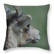 Female Bighorn Throw Pillow