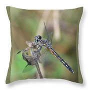 Female Blue Dasher In July  Throw Pillow