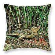 Female Bobolink At Nest Throw Pillow