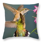 Female Broad-tailed Hummingbird Throw Pillow