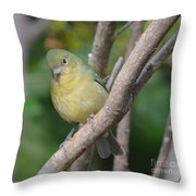 Female Bunting  Throw Pillow