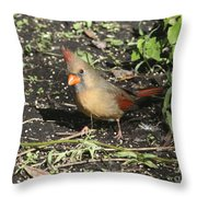 Female Cardinal Throw Pillow