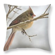 Female Cardinal In Snow 02 Throw Pillow
