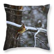 Female Cardinal In Snow Throw Pillow