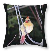 Female Cardinal In Tree Throw Pillow