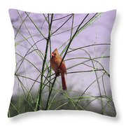 Female Cardinal In Willow Throw Pillow