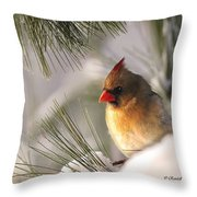 Female Cardinal Nestled In Snow Throw Pillow
