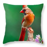 Female Cardinal Posing Pretty  Throw Pillow
