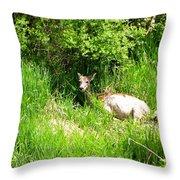 Female Deer Resting Throw Pillow