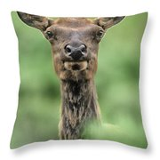 Female Elk Portrait Yellowstone National Park Wyoming Throw Pillow