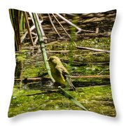 Female Gold Finch Drinking Throw Pillow
